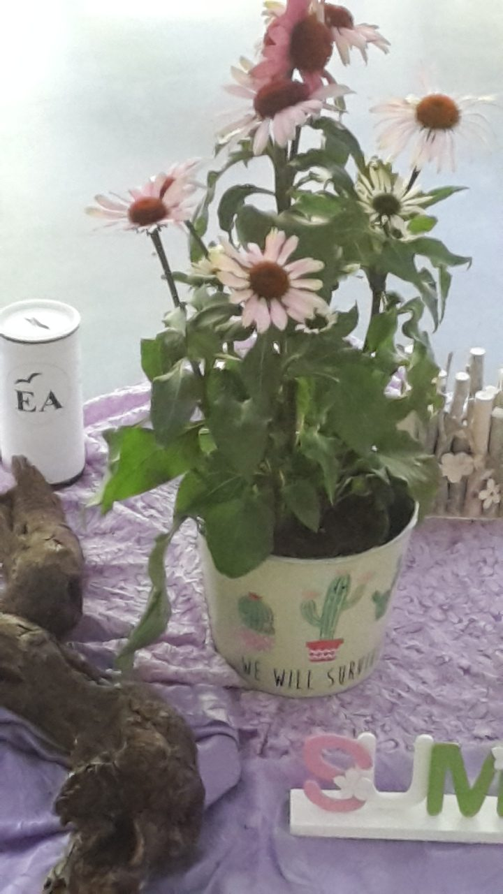 Meetingsdeko Blumen